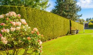 Настоящие дачники знают как правильно огородить свою дачу от постороннего взгляда.