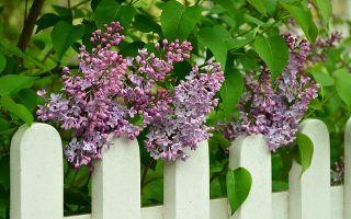 Какой забор является более стильным для вашего дома?